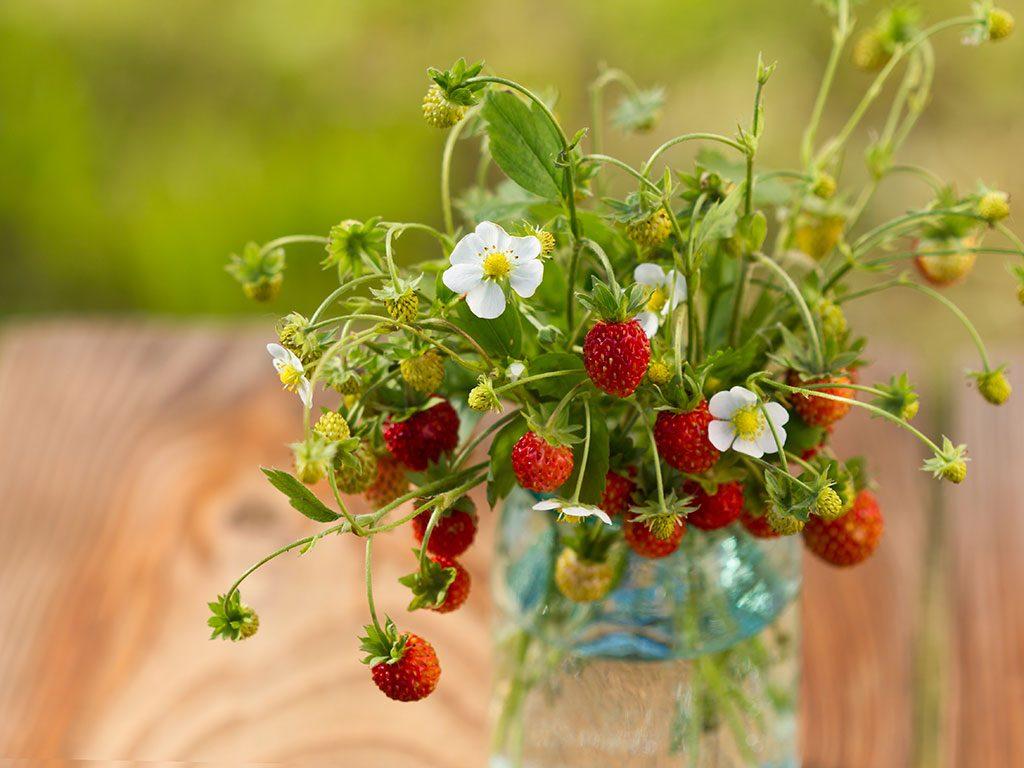 En glasvas på ett träbord full med smultronplantor med röda bär och vita blommor